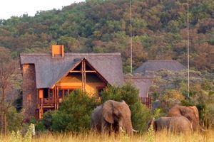 Olifanten in het Kololo Game Reserve - Kololo Lodge - Zuid-Afrika