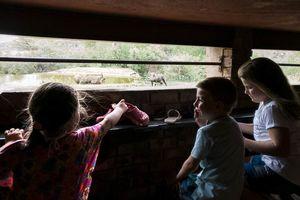 Kinderen in de wildhut, kijkend naar knobbelzwijnen - Limpopo - Zuid-Afrika - foto: Dirk
