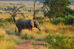 welgevonden game reserve - welgevonden game reserve - Zuid-Afrika