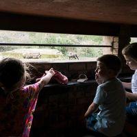 reizen met kinderen in zuid-afrika regels
