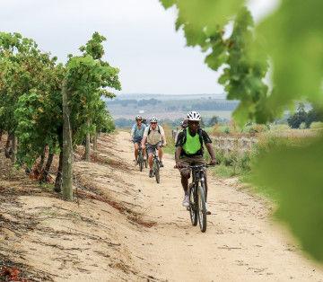 Fietstour Stellenbosch - Zuid-Afrika - foto credit Bikes 'n Wines