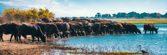 Reisadvies Botswana
