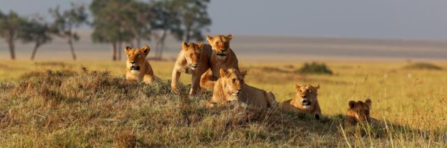 Reisadvies Kenia