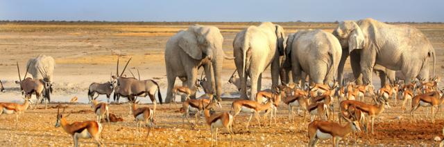 Reisadvies-Namibie.png