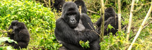 Reisadvies Rwanda