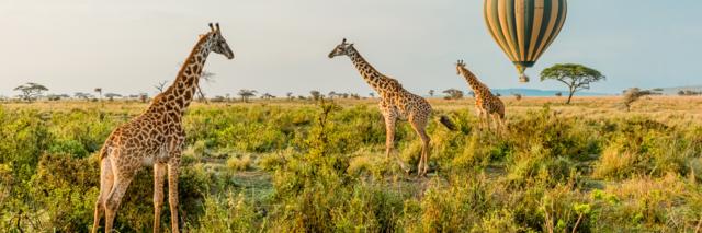 Reisadvies-Tanzania.png