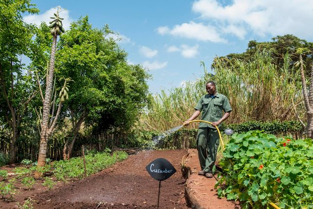 Rhotia Valley - groenten uit eigen tuin - Tanzania