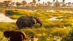 Delta Camp - veranda - Okavango Delta - Botswana