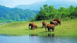 olifanten aan rivier - Periyar - India