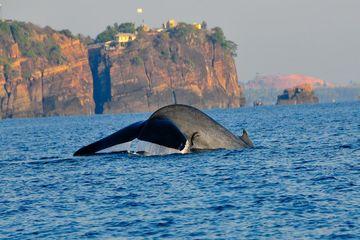 walvis bij Trincomalee - Trincomalee - Sri Lanka